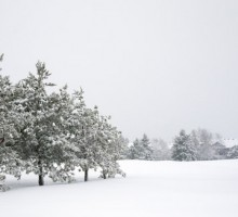 snowy-winter-field-tree-branches-blanket-snow-falling-free-stock-photo